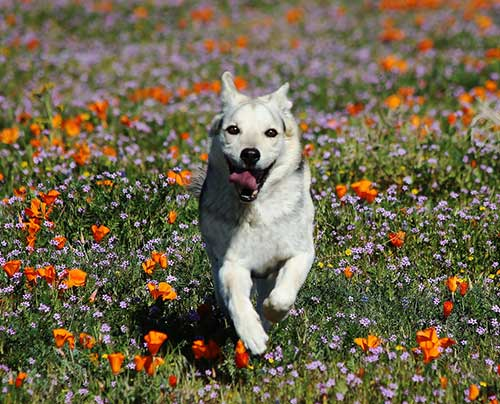 Spring Activities to Do with Your Dog