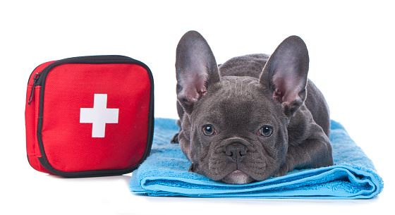 Common Dog Emergencies
