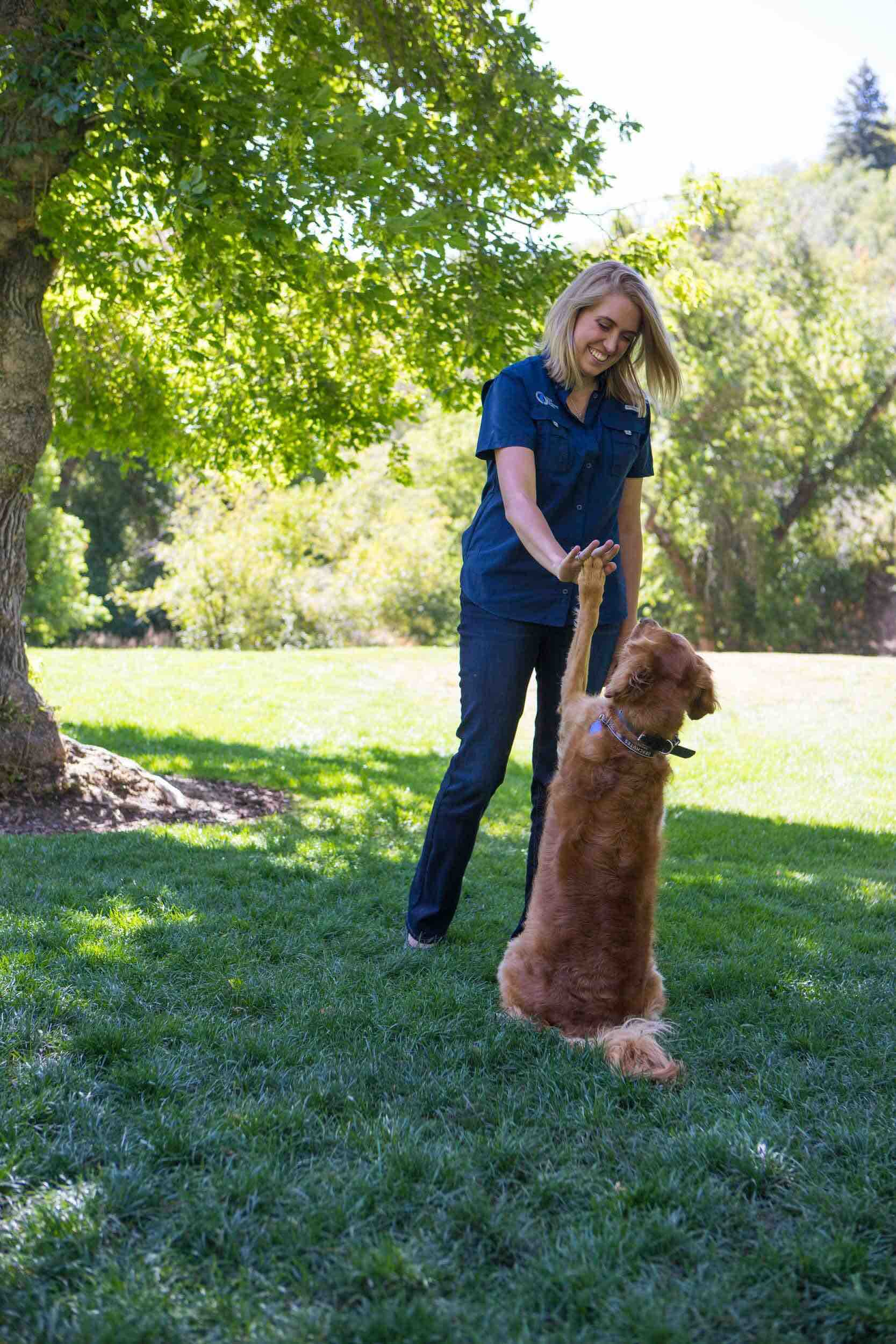 Dog Training Elite is the top dog training company with the best dog trainers near you in Atlanta.