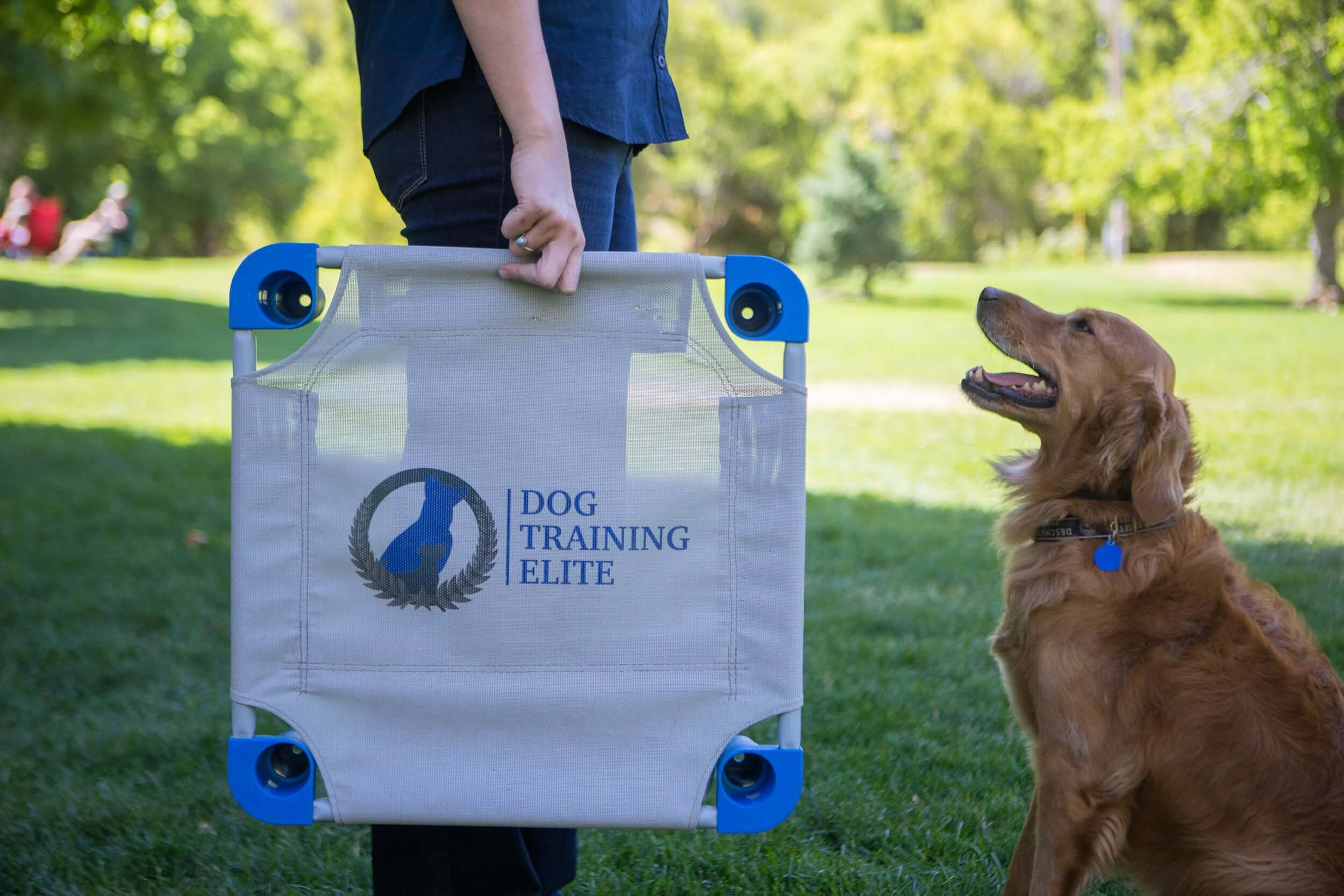 dog training business