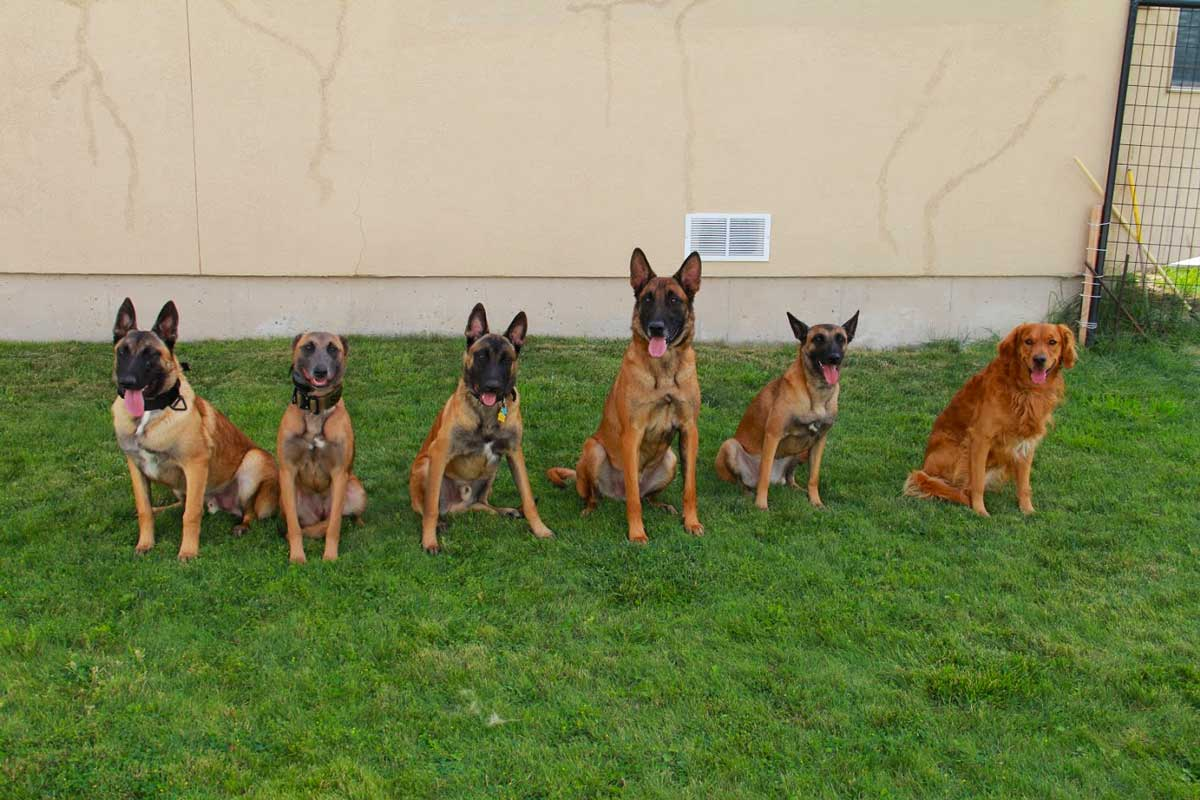dog training franchises