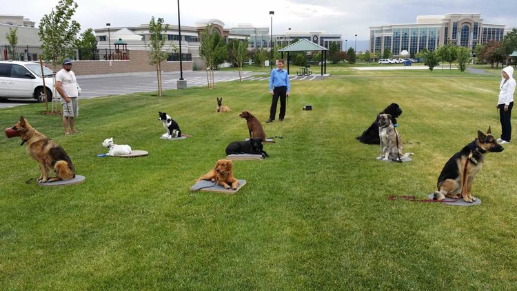 Dog Training Elite offers professional group dog obedience training classes for all clients in Scottsdale.