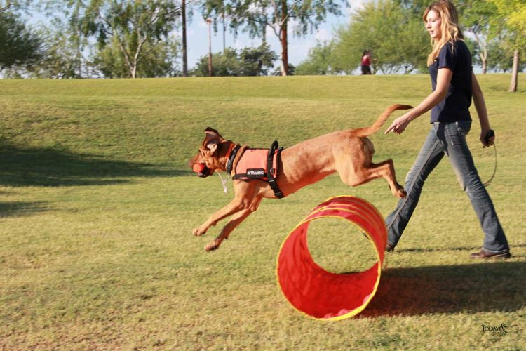 top dog training franchises