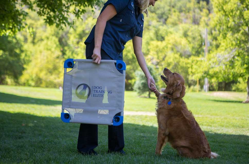 Dog Training Elite in Scottsdale has expert dog trainers that use a positive training method with optimal results.