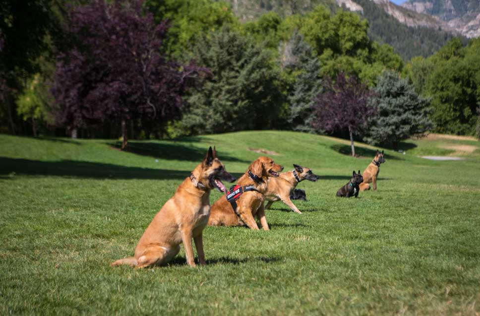 In-Home Dog Trainers Near You in Colorado Springs