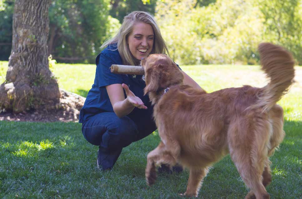 Top Dog Trainers Near Me in Colorado Springs