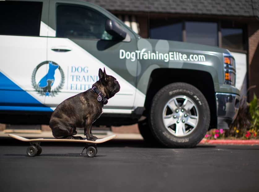 Best In-Home Dog Trainers Near Me in Colorado Springs